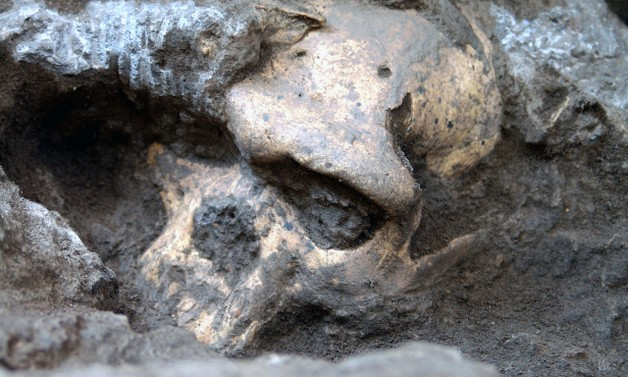 The Dmanisi Skull and the Narrative of Human Origins